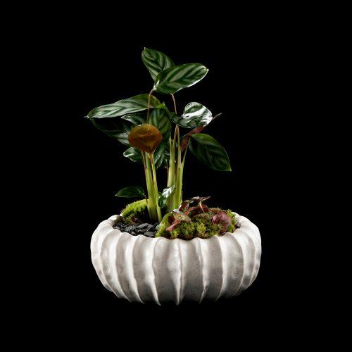 Flor Maison