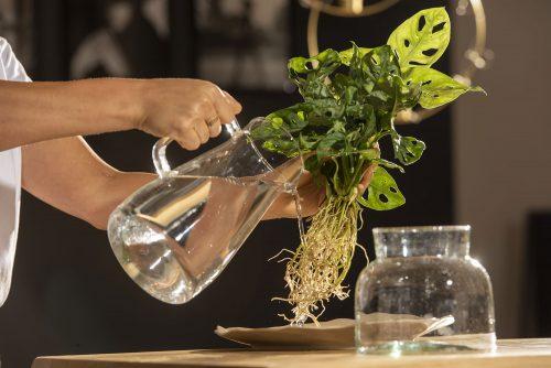 Hydroponic Plants: la fase di lavaggio