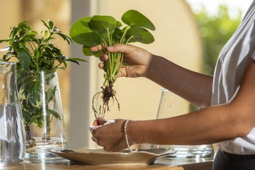 La cura delle piante idroponiche