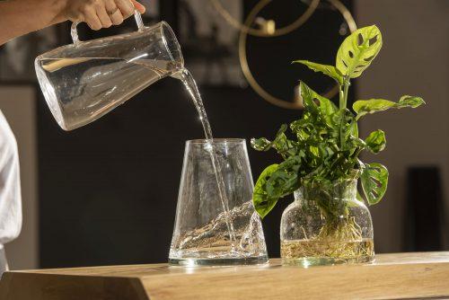 Piante Idroponiche: un microcosmo d'acqua