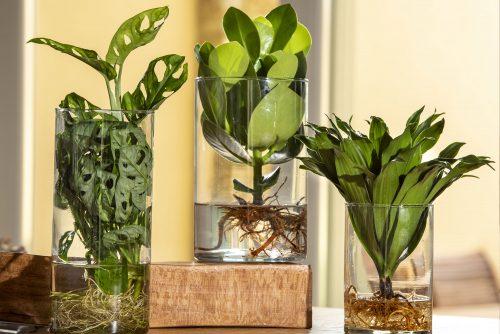Composizione di piante idroponiche