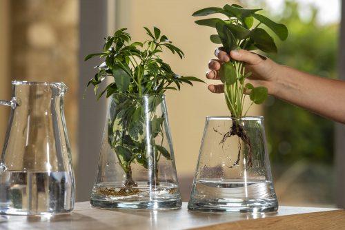 Hydroponic Plants: il progetto di Flor Maison