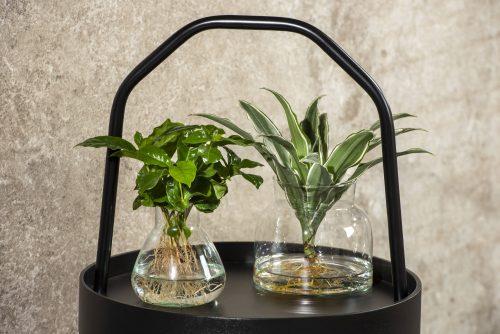 Hydroponic Plants: il nostro progetto