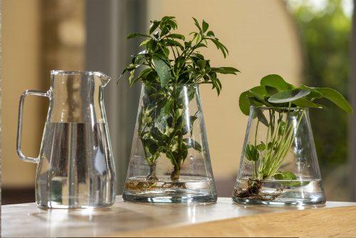 Hydroponic Plants: scopri i prodotti