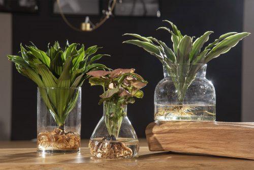 Hydroponic Plants: una composizione
